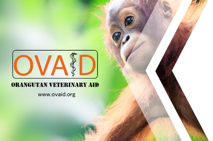 Orangutan Veterinary Aid